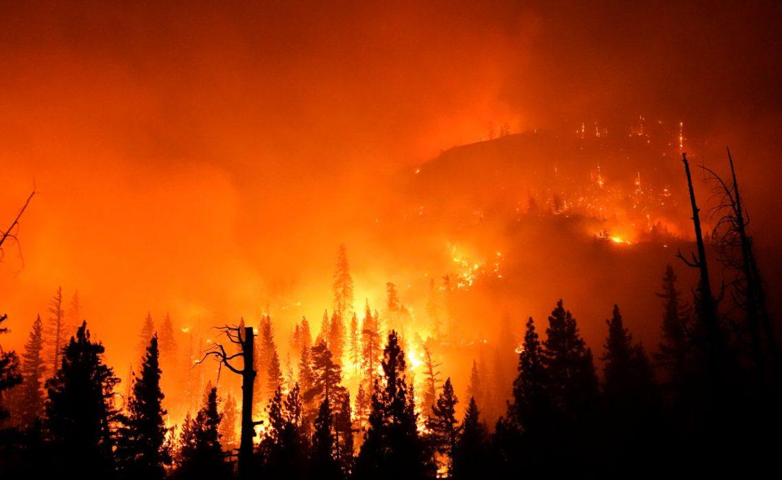 trees burning